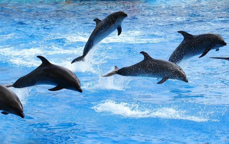 名古屋港水族館のイルカショー