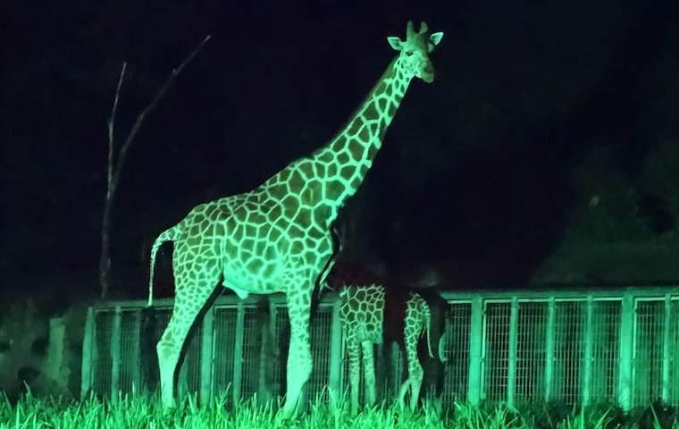 東山動物園のナイトZOO